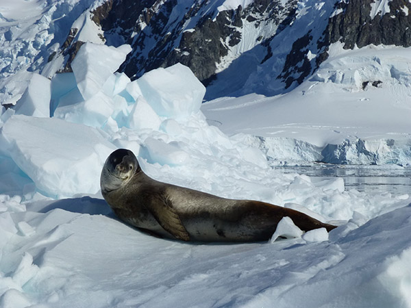 09. Seal