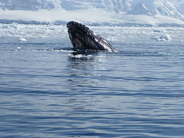 10. Whale